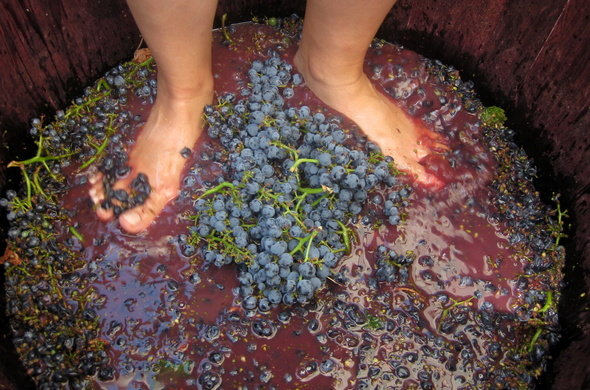 wine-stomping-590x390